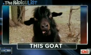 Anderson Cooper's Goat
